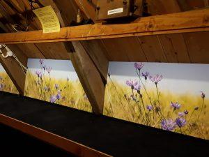 Schotten in Graanmuseum Woldzigt voorzien van korenbloemen fotobehang